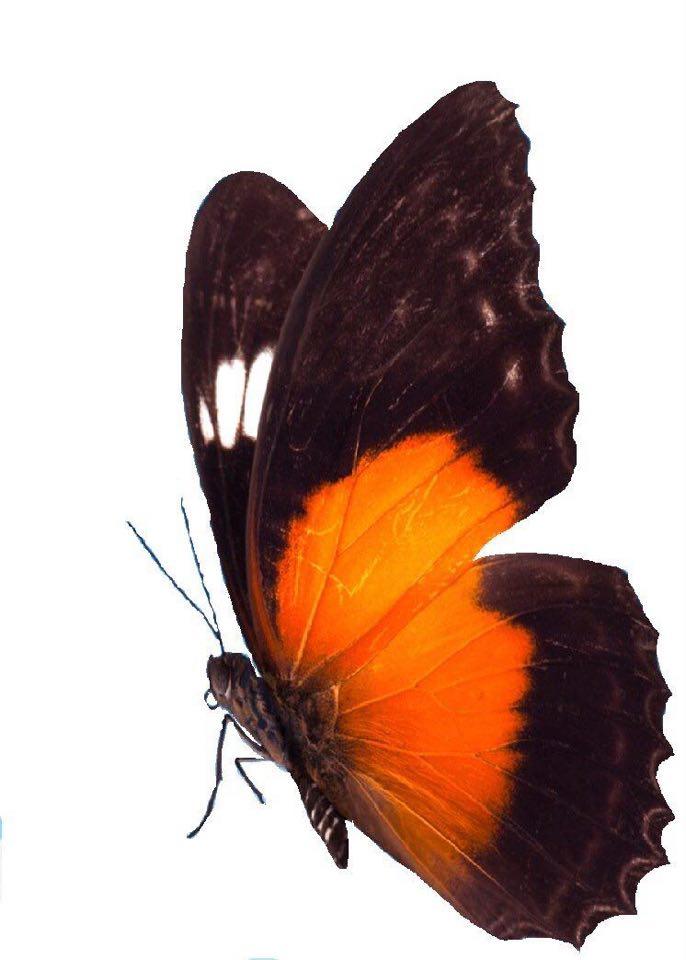 Het Vlinderrijk